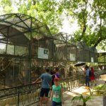 Hanoi Zoo, Small predator enclosures with leopard cat, civets and Asian golden cat