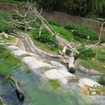 San Diego Zoo, Swamp area of otter, monkey, red river hog and forest buffalo enclosure
