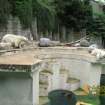 Wuppertal Zoo, Polar bear enclosure