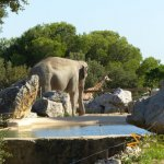 La Barben Zoo, Asiatic elephant and giraffe both in their own enclosure but caught in one shot