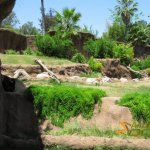 Los Angeles Zoo and Botanical Gardens, Campo Gorilla Reserve