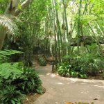 San Diego Zoo, Sheltered footpath in the Lost Forest area