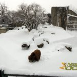 Sofia Zoo, Grizzly bear enclosure
