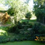 Doué-la-Fontaine Zoo, African lion exhibit
