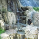 Los Angeles Zoo and Botanical Gardens, Chimpanzee enclosure