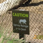 San Diego Zoo, Be aware, it's lion territory