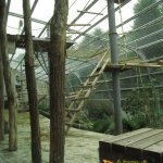 Rhenen Zoo, Ouwehands Dierenpark, Gorilla Adventure outdoor part