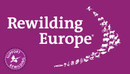 Support Rewilding Europe