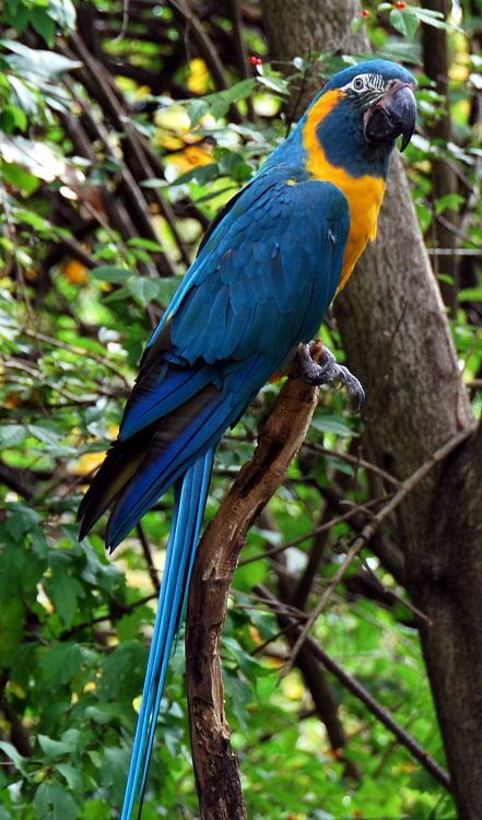 Blue-throated macaw refuge in Bolivia doubled in size