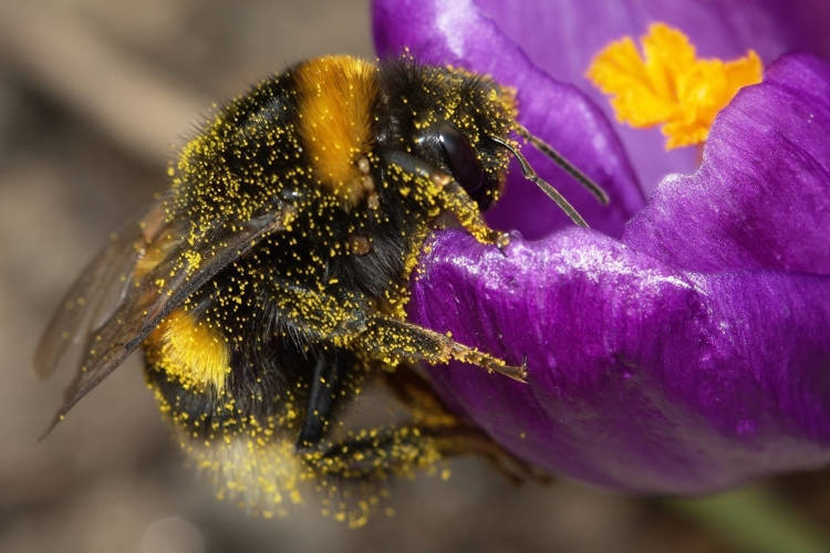 Could urbanisation and biodiversity bee compatible?