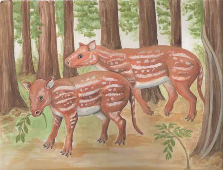 Ancestor of horses and rhinos originated in India while it was still an island