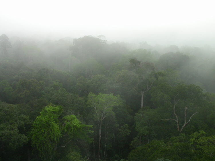 Scientists estimate 16,000 tree species in the Amazon