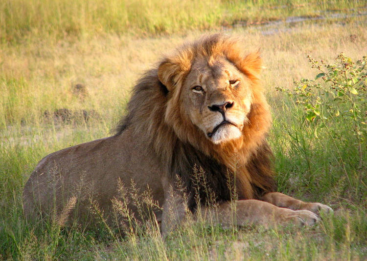 Banning trophy hunting could do more harm than good