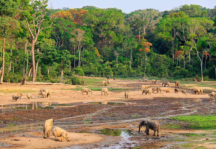 At least 26 elephants massacred in World Heritage site