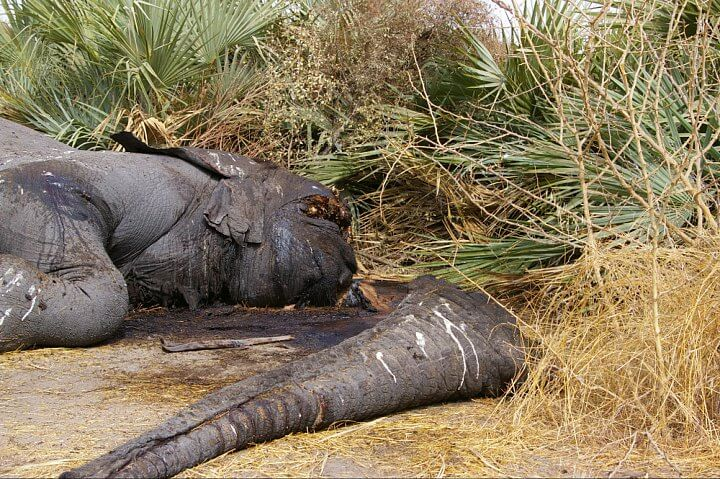Governments commit to decisive and urgent action to tackle global wildlife poaching crisis