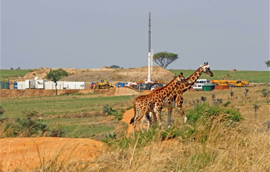 Giraffes in protected area drilling activity