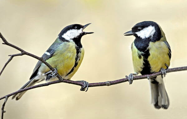 Birds outpace climate change to avoid extinction