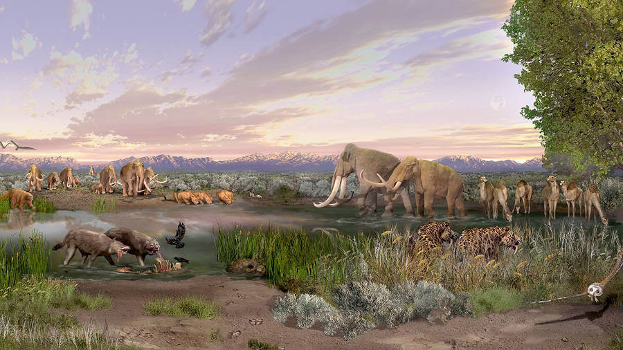 Unprecedented wave of large-mammal extinctions linked to (ancient) humans