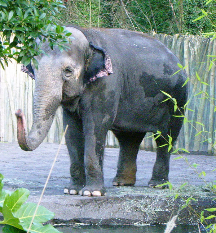Oregon Zoo staff contracted tuberculosis from the Zoo's elephants in 2013
