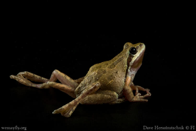 Amphibian Study shows how biodiversity can protect against disease