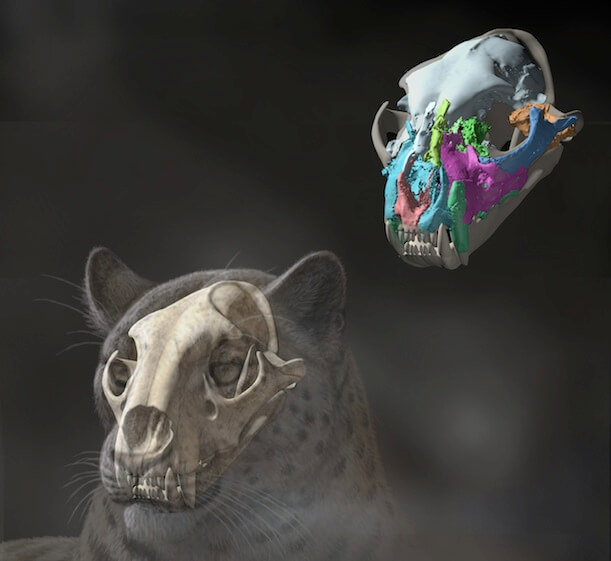 Oldest fossil skull ever of a big cat found in Tibet may reshape feline family tree