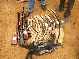 Illicit wildlife trafficking recognised as a new form of transnational organised crime
