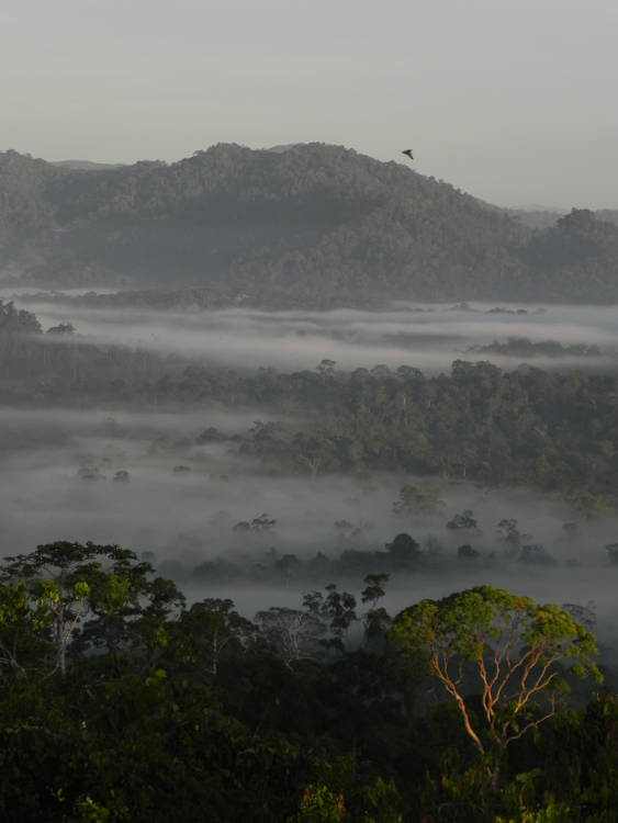 Role of current tropical protected areas questionable under climate change