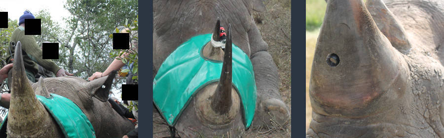 New invention drives poaching to extinction!