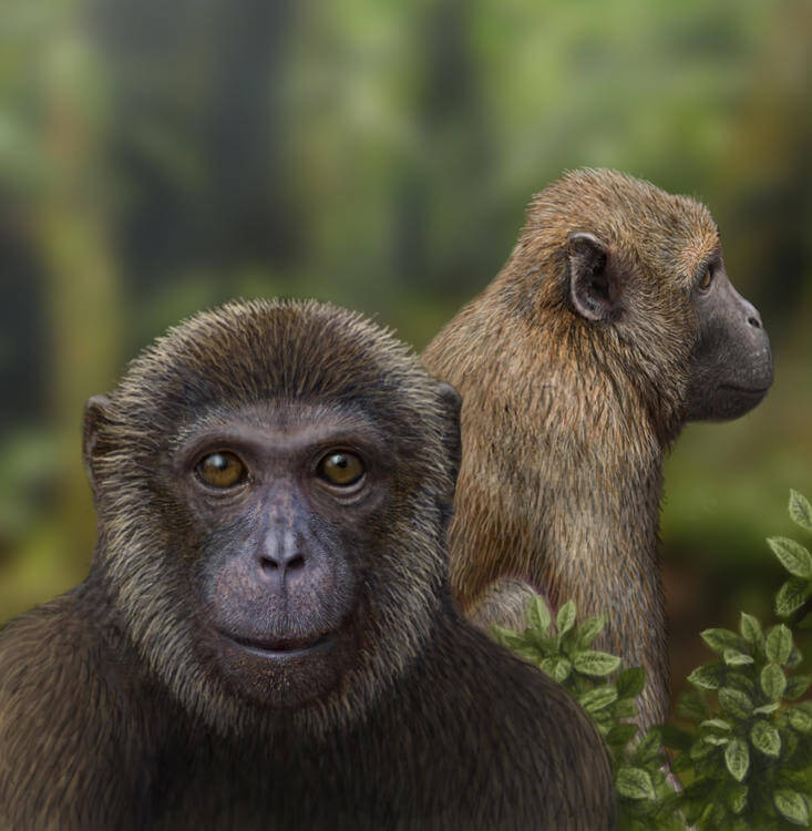 Oldest evidence of split between Old World monkeys and apes – 25 million years old