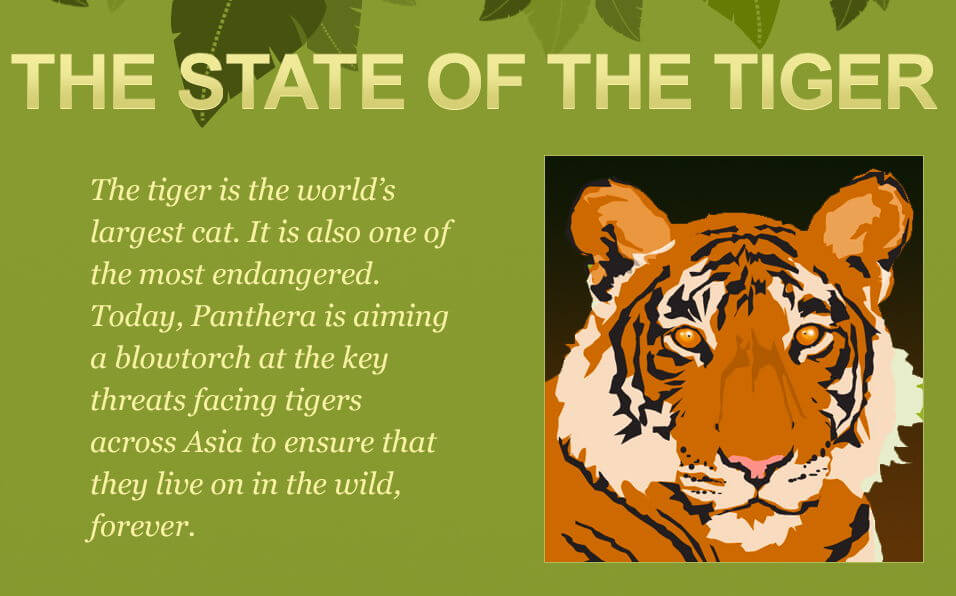 State of the Tiger