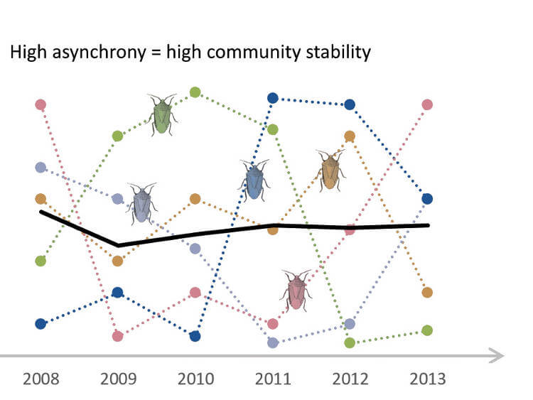 Asynchrony of species more important than their diversity for ecosystems