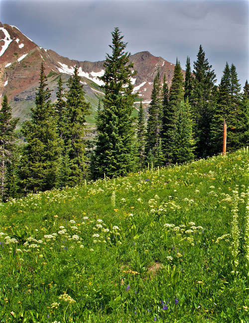 Climate change will affect mountain ecosystems globally
