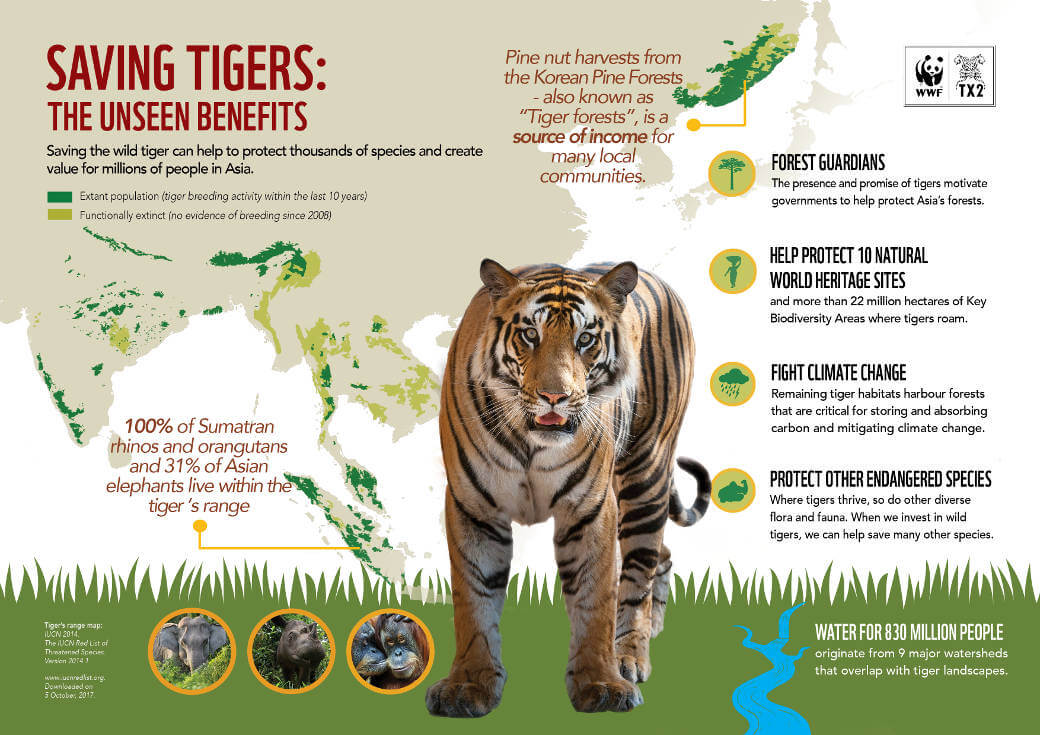 Unseen Benefits from Tigers