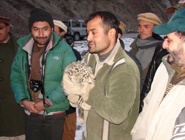 Snow leopard cub taken from wild will be used for educational purposes in Pakistan