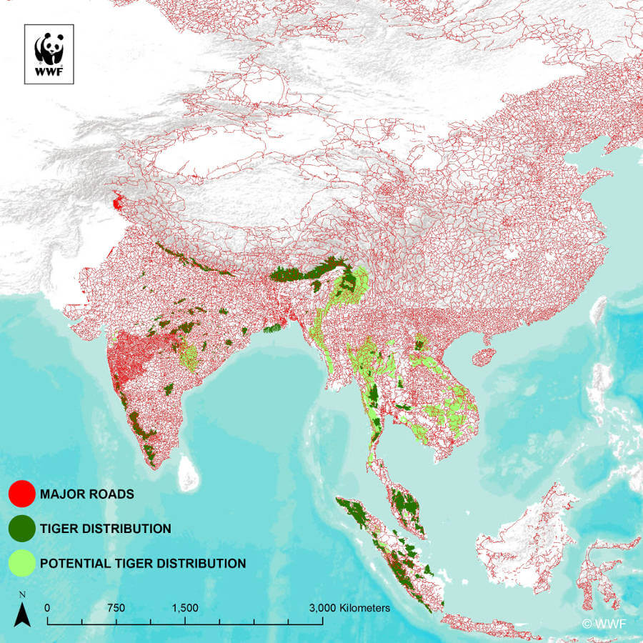 WWF report the road ahead infrastructure vs tigerpopulation