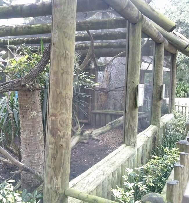 Toxin in wood used for enclosures could harm zoo animals