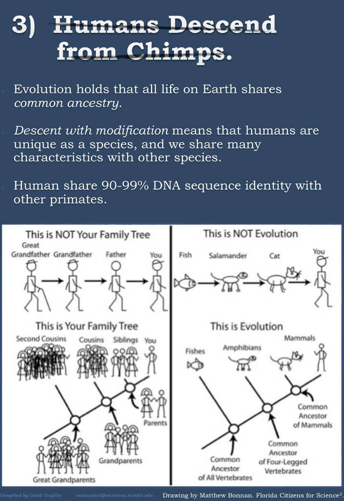 evolution infographic4