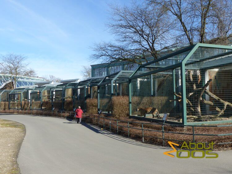 row of outdoor cat enclosures