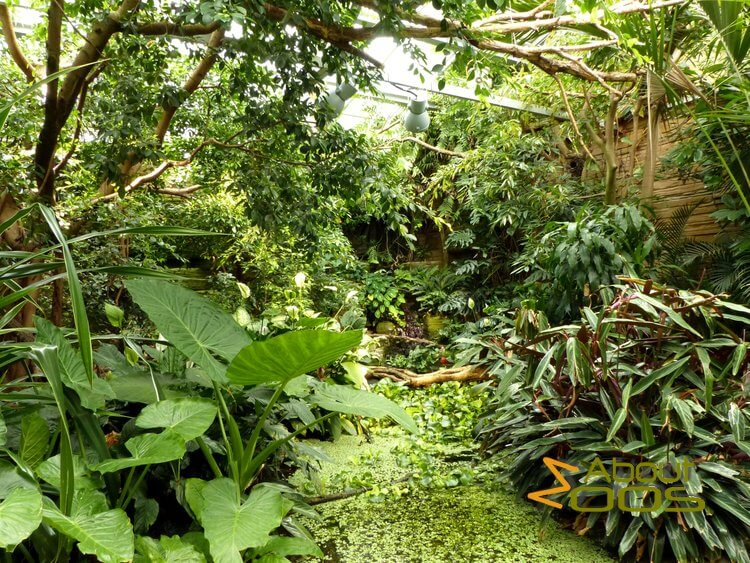 walk-in jungle aviary