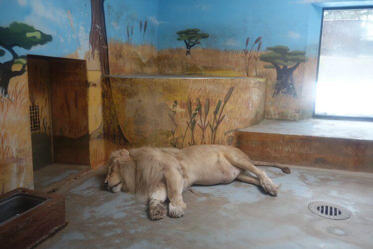 bratislava zoo