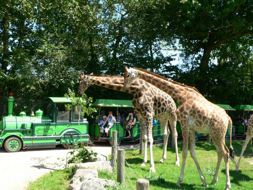 Safari train at Cerza Zoo