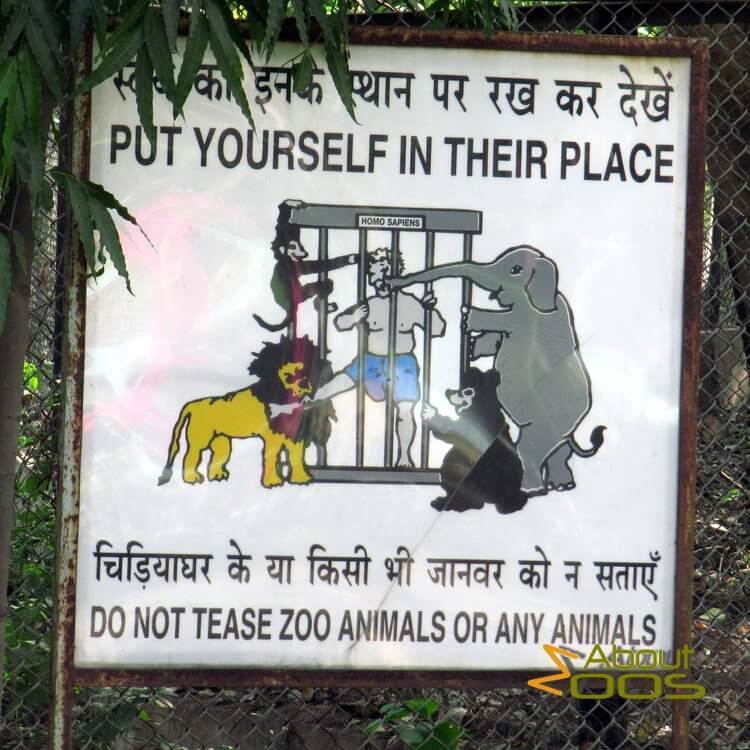 Do not tease zoo animals or any animals