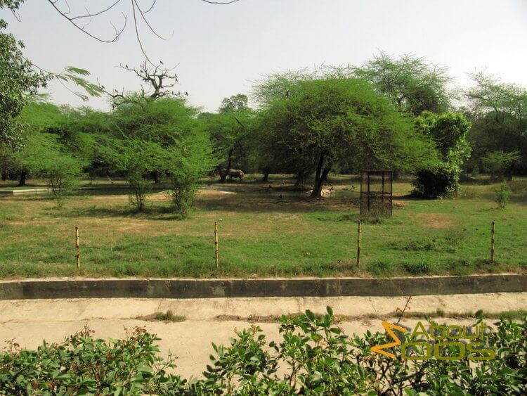 Indian rhino enclosure