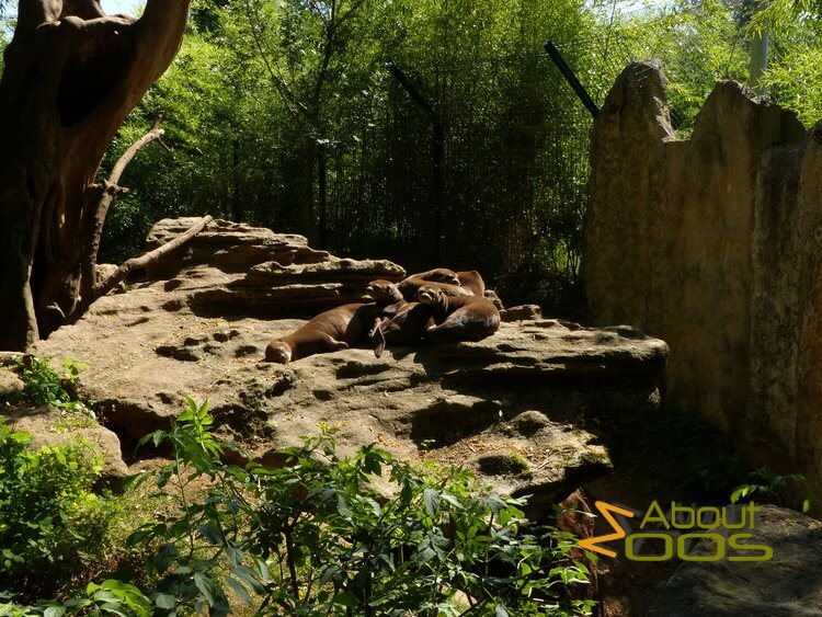 giant otters relaxing