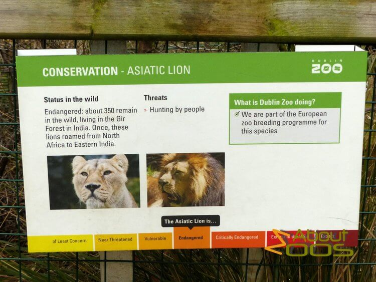 Asian lion information panel