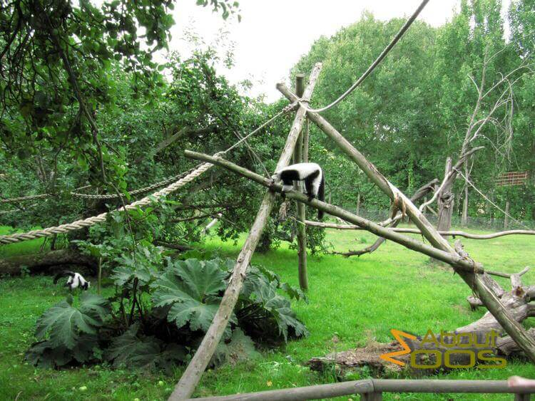 Howletts Wild Animal Park | About Zoos