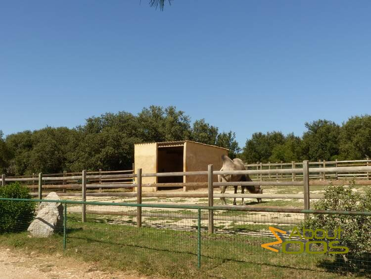 bactrian camel enclosure