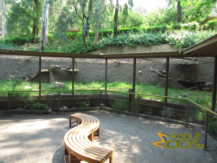 LA Zoo serval enclosure