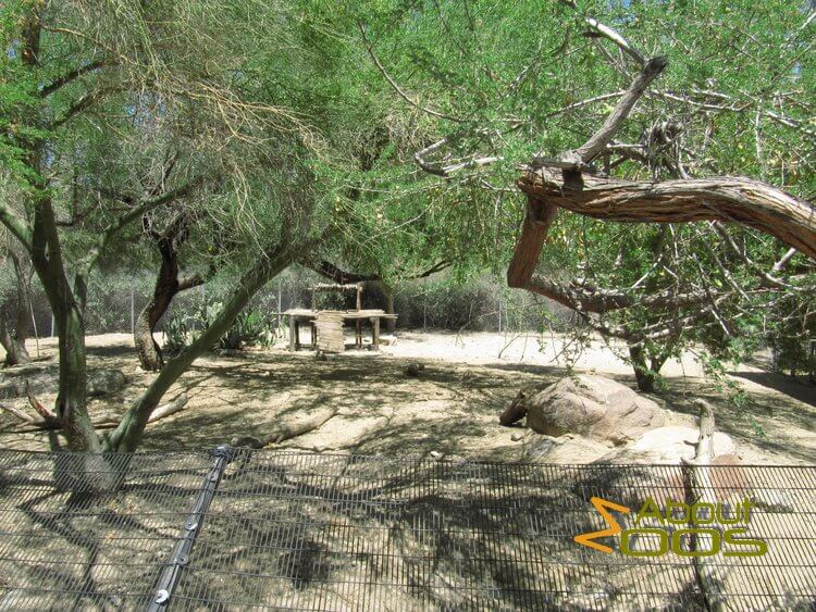 Coyote enclosure, The Living Desert