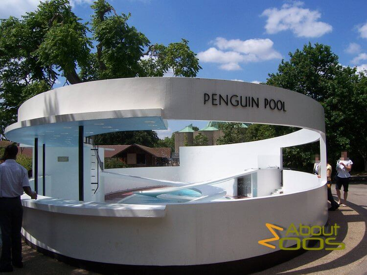 Penguin Pool in London Zoo
